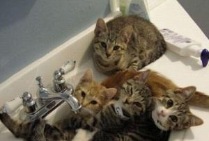 Cat-Jacuzzi-Party